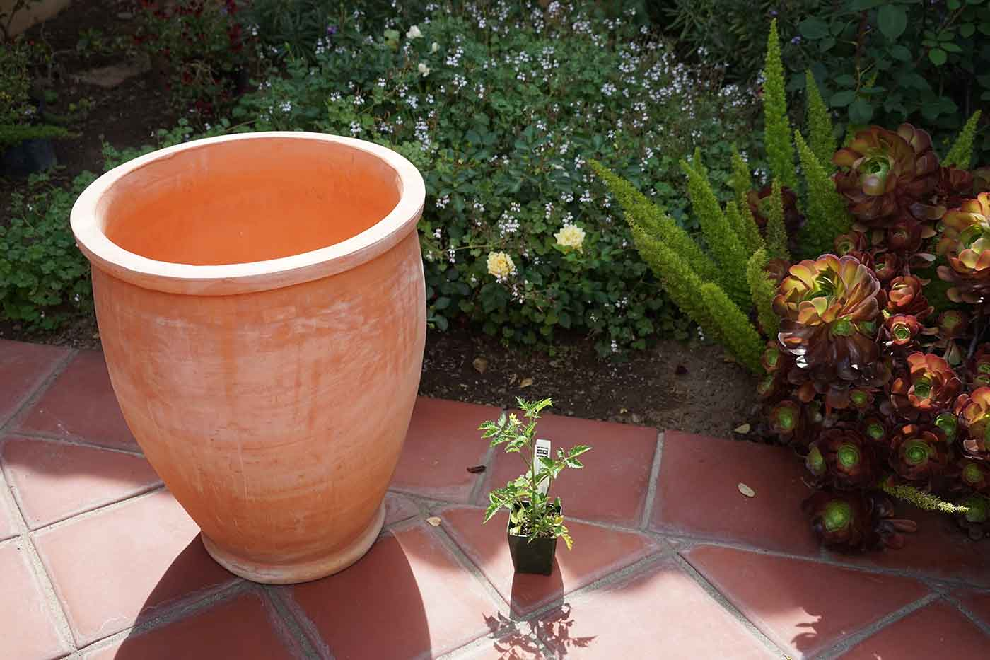 a large empty urn-shaped pot next to a tiny tomato seedling on a patio