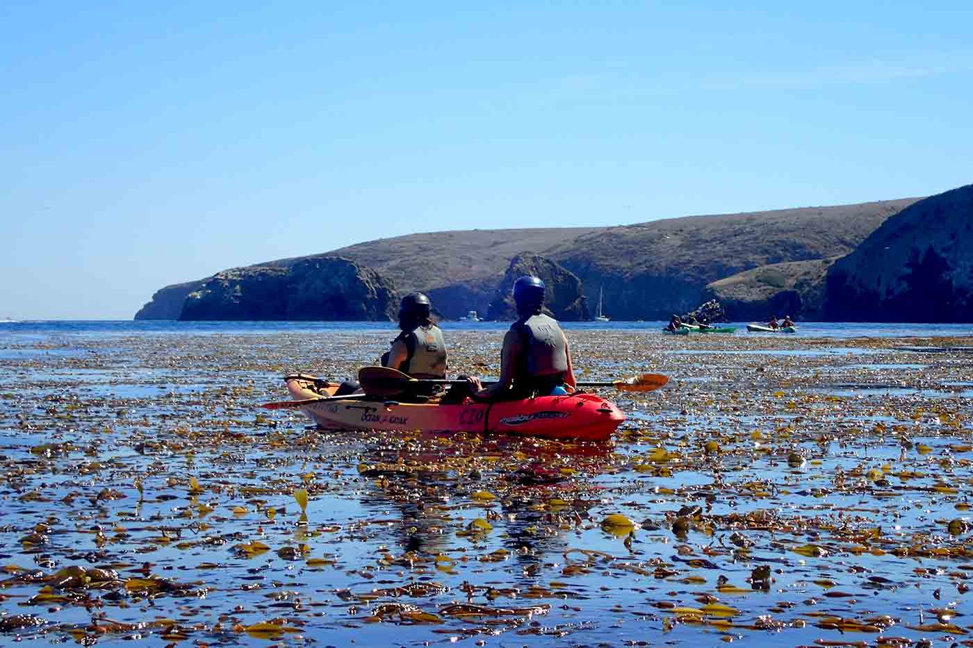 kayaking over a giant kelp forest on a sunny afternoon at Santa Cruz Island