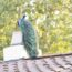peacock on a roof in Pasadena