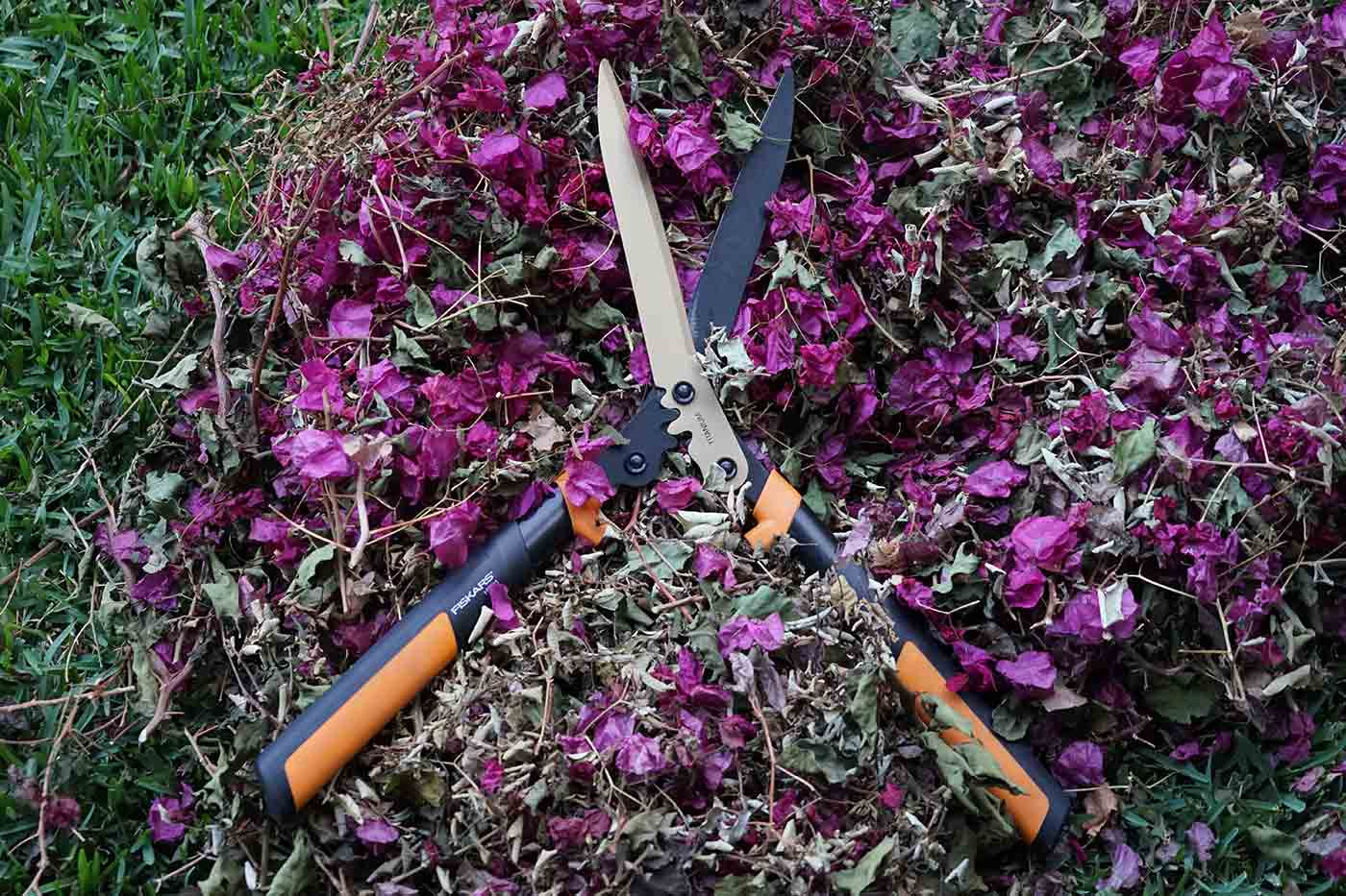 dry leaves and flowers carbon for composting