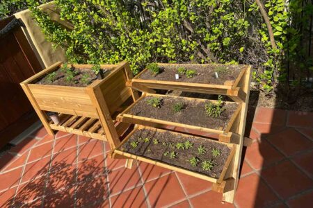 seedling herb and strawberry plants in a wooden planter