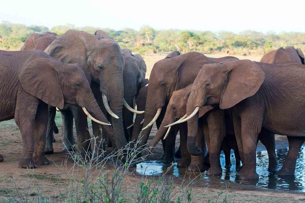 Elephants in Kenya by Bill Clark