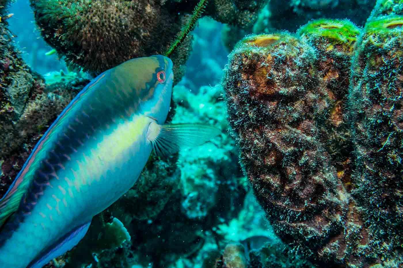 fish Bonaire Island